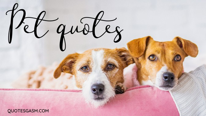 Pet and Animal Quotes Collection - cover